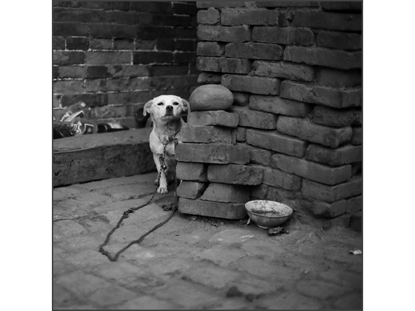 Andrew Ross - Humanity - White Dog, Pingyao